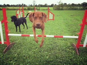 AGILITY6-Day-care-page