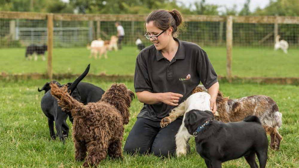 Basic dog training at Lily's Barn